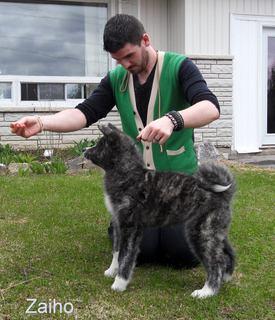 Japanese Akita Canada Breeder Ontario Serdess